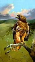 Hawkeye Fine-Art Print