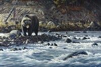 Along The Yellowstone - Grizzly Fine-Art Print