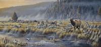Autumn Classic - Elk Fine-Art Print