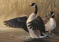 1994 Canada Geese Fine-Art Print