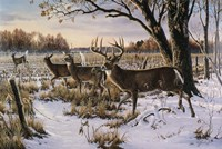 Cautious Crossing - Whitetails Fine-Art Print