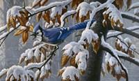 Changing Season Fine-Art Print