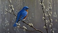 Signals Of Spring - Eastern Bluebird Fine-Art Print