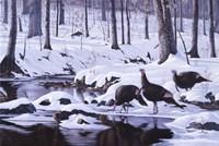 Hardwood Creek - Wild Turkeys Fine-Art Print