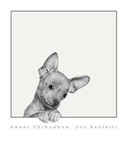 Sweet Chihuahua Fine-Art Print