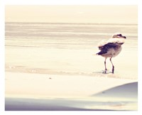 Bird at The Beach Fine-Art Print