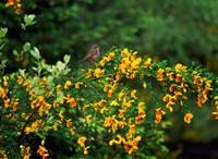 Song Sparrow Bird Fine-Art Print
