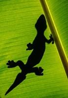 Leopard Gecko, Tortuguero, Costa Rica Fine-Art Print