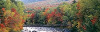 White Mountain National Forest, NH Fine-Art Print
