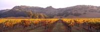 Stag's Leap Wine Cellars, Napa Valley, CA Fine-Art Print