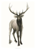 Majestic Wildlife II Fine-Art Print