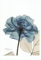 Teal Spirit Rose Fine-Art Print