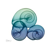 Sea Sky Snails Fine-Art Print