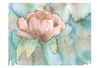 Blush Rose Fine-Art Print