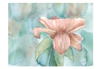 Blush Rose 2 Fine-Art Print