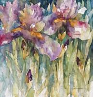 Siberian Iris Fine-Art Print