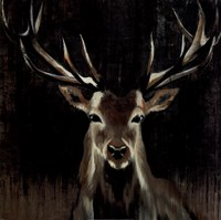 Young Buck Fine-Art Print