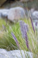 Purple Wild Grass I Fine-Art Print