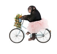 Monkeys Riding Bikes #1 Fine-Art Print