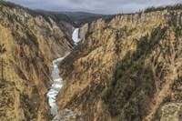 Yellowstone Grand Canyon - Lower Falls Fine-Art Print