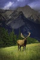 Elk Against Mountainside Fine-Art Print