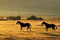 Horses Running at Sunset Fine-Art Print