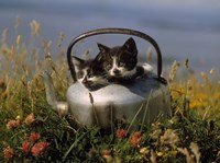 Kitten on Tea Pot in Field Fine-Art Print