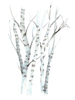 Aquarelle Birches II Fine-Art Print