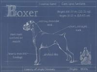Blueprint Boxer Fine-Art Print
