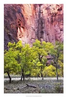 Canyon Cottonwoods Fine-Art Print