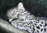 Amur Leopard Cub Fine-Art Print