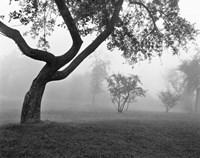 Morning Mist, Farmington Hills, Michigan 82 Fine-Art Print