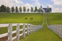 Manchester Farm, Kentucky 08 Fine-Art Print