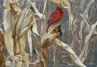 Autumn Cornfield - Cardinal Fine-Art Print