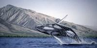 Breeching Humpbacks - Maui Fine-Art Print