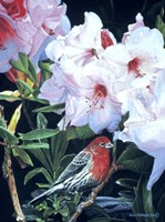 Housefinch And Rhododendron Fine-Art Print