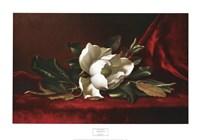 Magnolia Flower Fine-Art Print