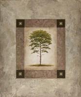 European Pine II Fine-Art Print