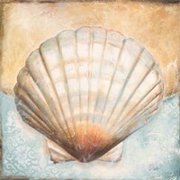 Seashell Collection III Fine-Art Print