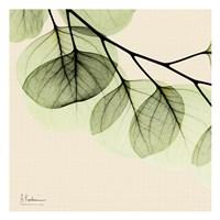 Mint Eucalyptus 3 Fine-Art Print