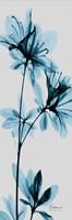 Blue Azalea Fine-Art Print