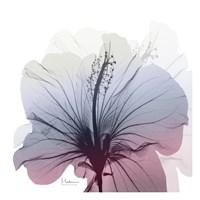 Tasty Grape Hibiscus Fine-Art Print