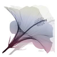 Tasty Grape Hibiscus 2 Fine-Art Print