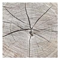 Tree Rings Fine-Art Print