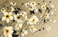 Anemones Japonaises Blancs Fine-Art Print