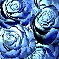 Blue Roses Square Fine-Art Print