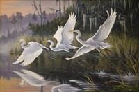 Morning Departure Egrets Fine-Art Print