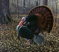 The King Of Spring - Wild Turkey Fine-Art Print