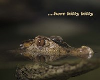 Here Kitty Gator Fine-Art Print