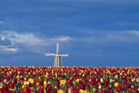 Windmill with Tulips Fine-Art Print